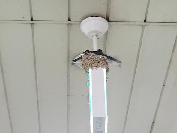 高蔵寺コンコースツバメの巣