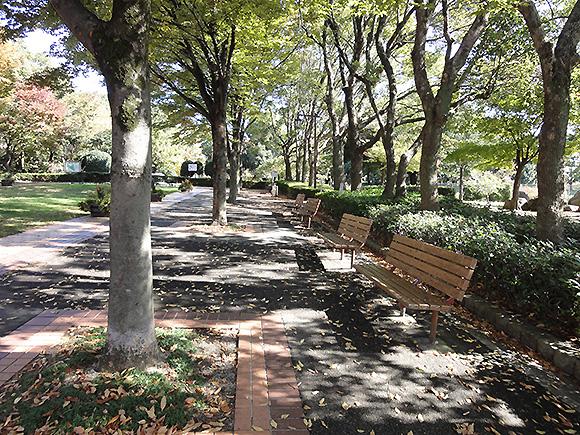 朝宮公園ベンチ